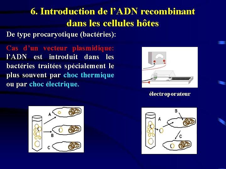 6. Introduction de l'ADN recombinant dans les cellules hôtes De type procaryotique (bactéries): Cas