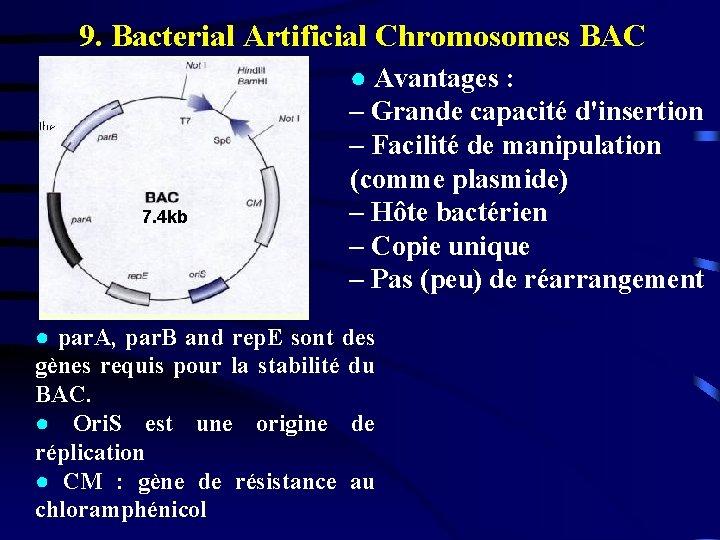 9. Bacterial Artificial Chromosomes BAC 7. 4 kb ● Avantages : – Grande capacité