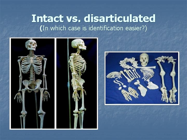 Intact vs. disarticulated (In which case is identification easier? )