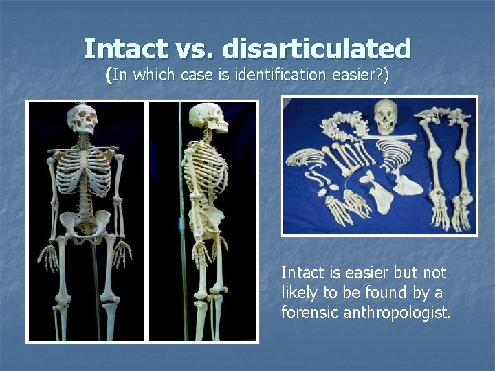 Intact vs. disarticulated (In which case is identification easier? ) Intact is easier but