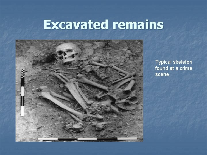 Excavated remains Typical skeleton found at a crime scene.