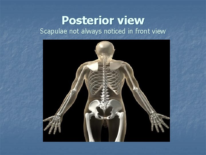 Posterior view Scapulae not always noticed in front view