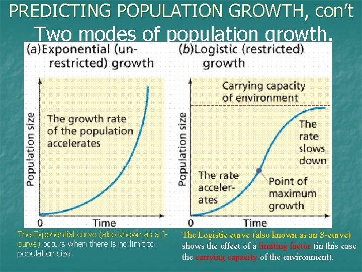 PREDICTING POPULATION GROWTH, con't Two modes of population growth. The Exponential curve (also known
