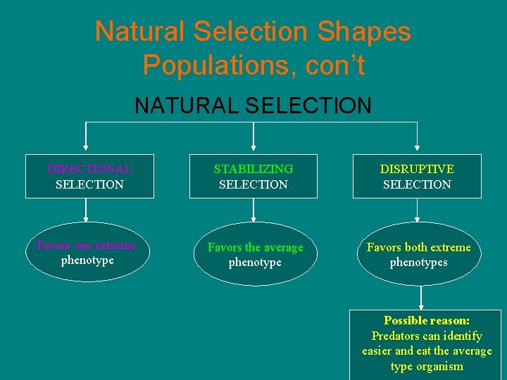 Natural Selection Shapes Populations, con't NATURAL SELECTION DIRECTIONAL SELECTION STABILIZING SELECTION DISRUPTIVE SELECTION Favors