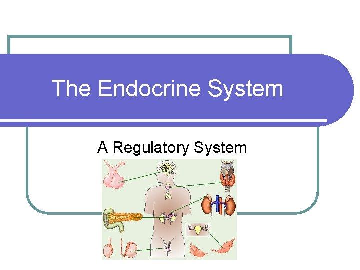 The Endocrine System A Regulatory System