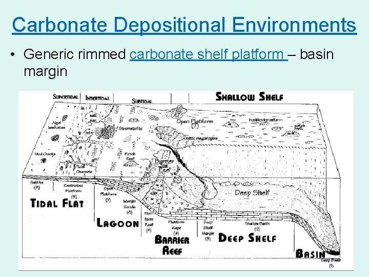 Carbonate Depositional Environments • Generic rimmed carbonate shelf platform – basin margin 40