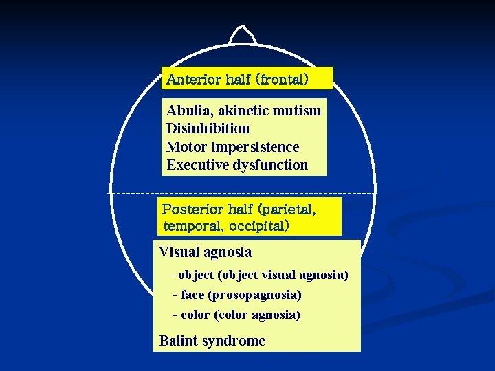 Anterior half (frontal) Abulia, akinetic mutism Disinhibition Motor impersistence Executive dysfunction Posterior half (parietal,