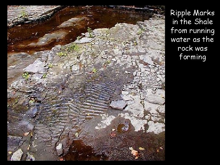 Ripple Marks in the Shale from running water as the rock was forming