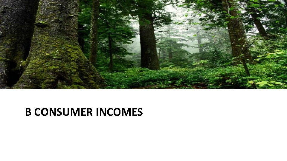 B CONSUMER INCOMES