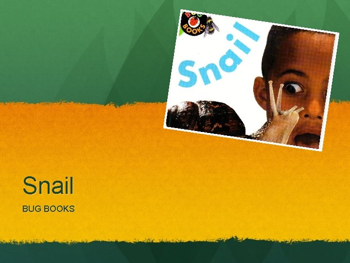 Snail BUG BOOKS