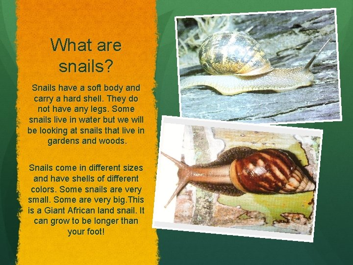 What are snails? Snails have a soft body and carry a hard shell. They