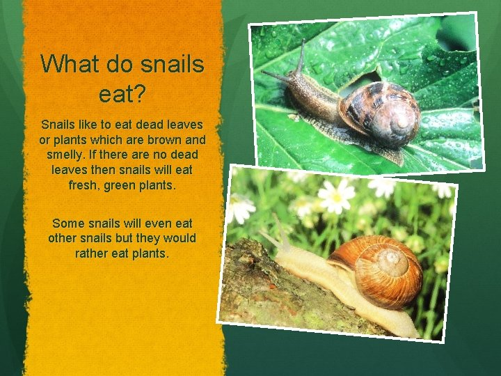 What do snails eat? Snails like to eat dead leaves or plants which are