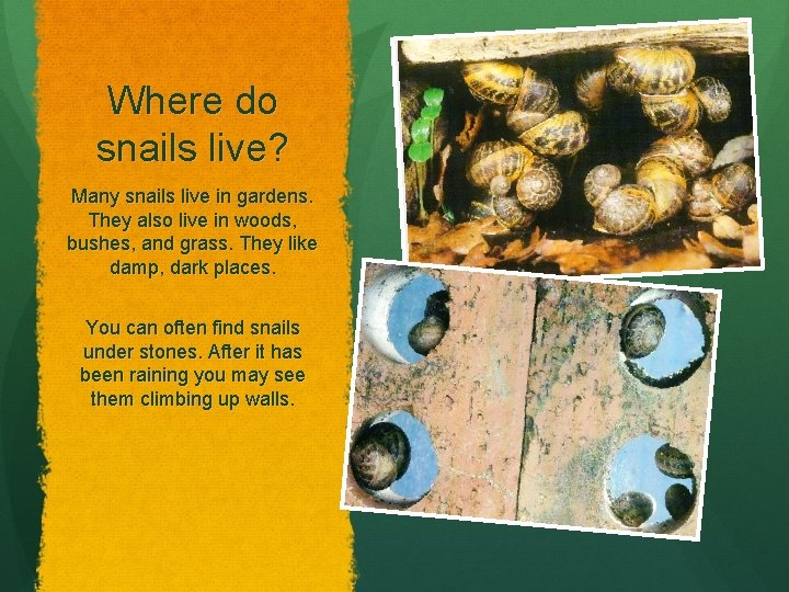 Where do snails live? Many snails live in gardens. They also live in woods,
