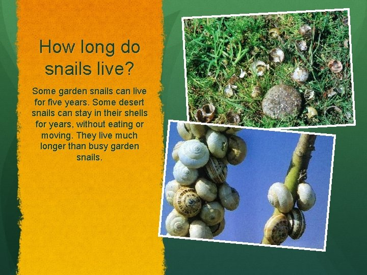 How long do snails live? Some garden snails can live for five years. Some