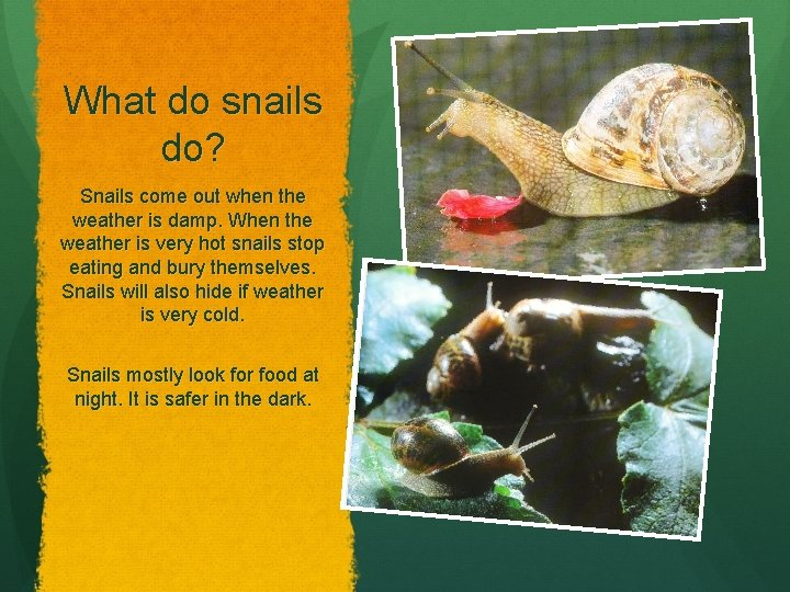 What do snails do? Snails come out when the weather is damp. When the