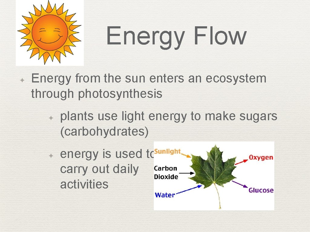 Energy Flow ✦ Energy from the sun enters an ecosystem through photosynthesis ✦