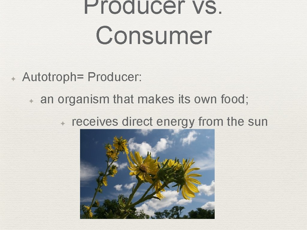 Producer vs. Consumer ✦ Autotroph= Producer: ✦ an organism that makes its own food;