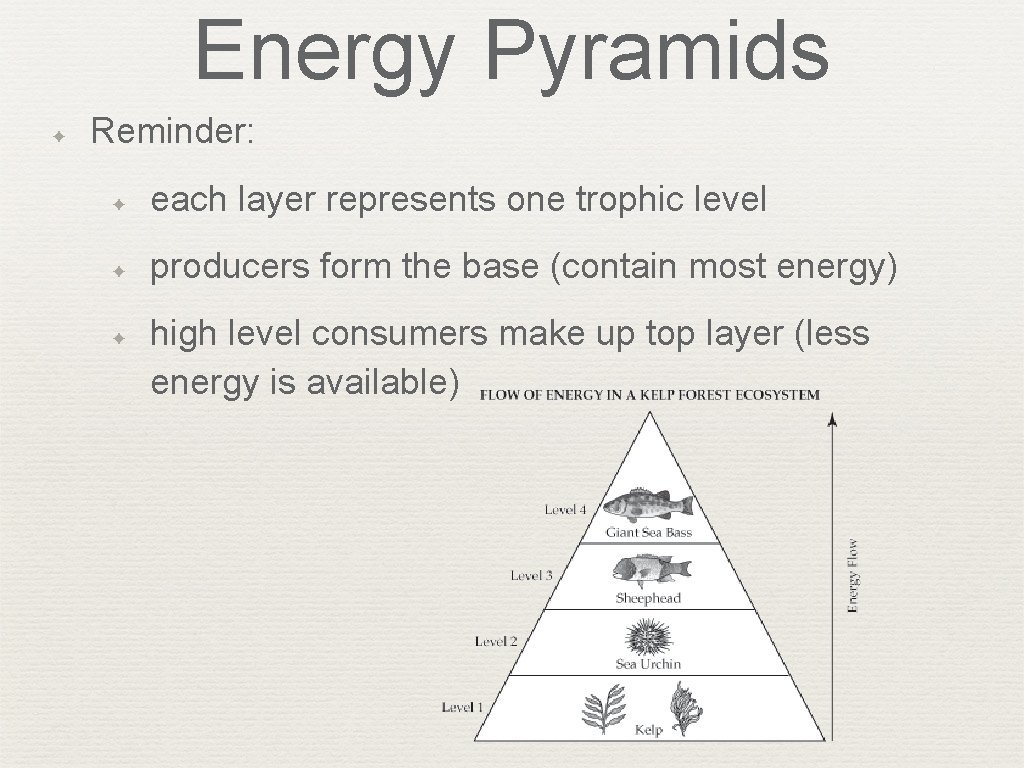 Energy Pyramids ✦ Reminder: ✦ each layer represents one trophic level ✦ producers form