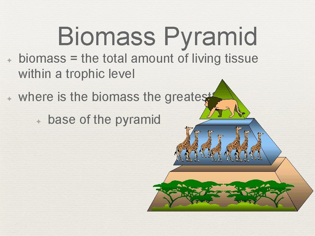 Biomass Pyramid ✦ ✦ biomass = the total amount of living tissue within a