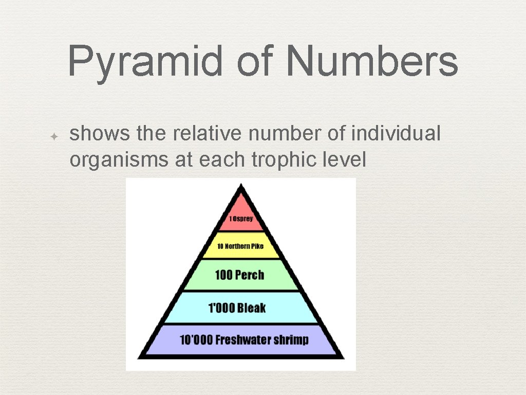 Pyramid of Numbers ✦ shows the relative number of individual organisms at each trophic