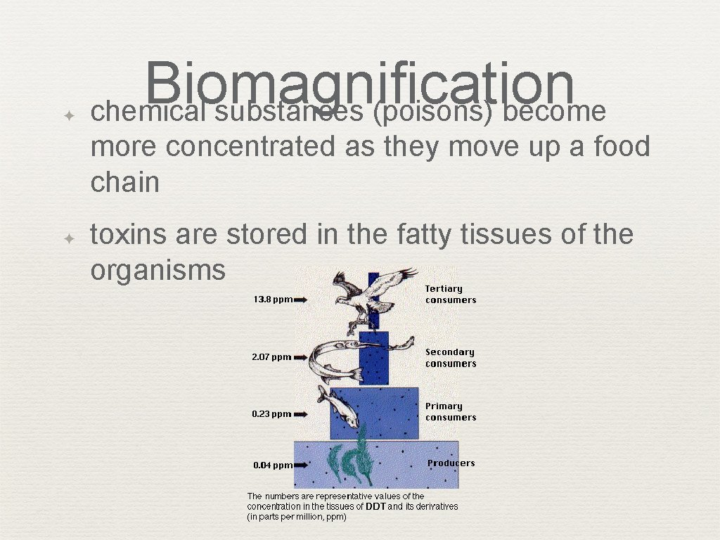 ✦ Biomagnification chemical substances (poisons) become more concentrated as they move up a food