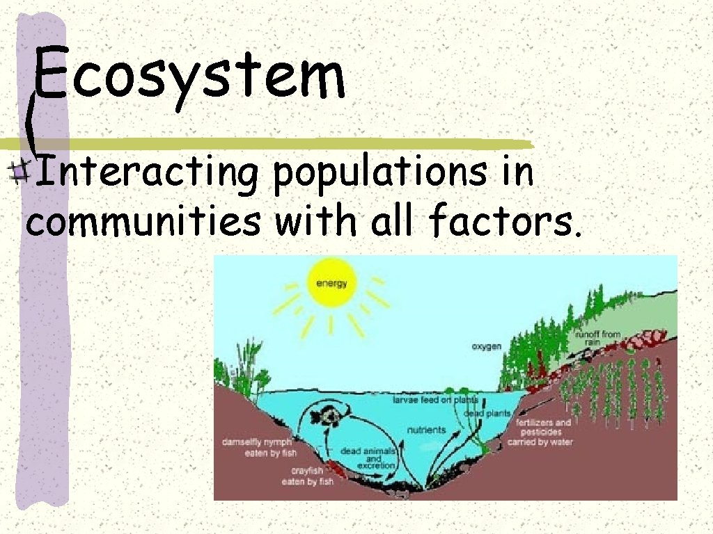 Ecosystem Interacting populations in communities with all factors.