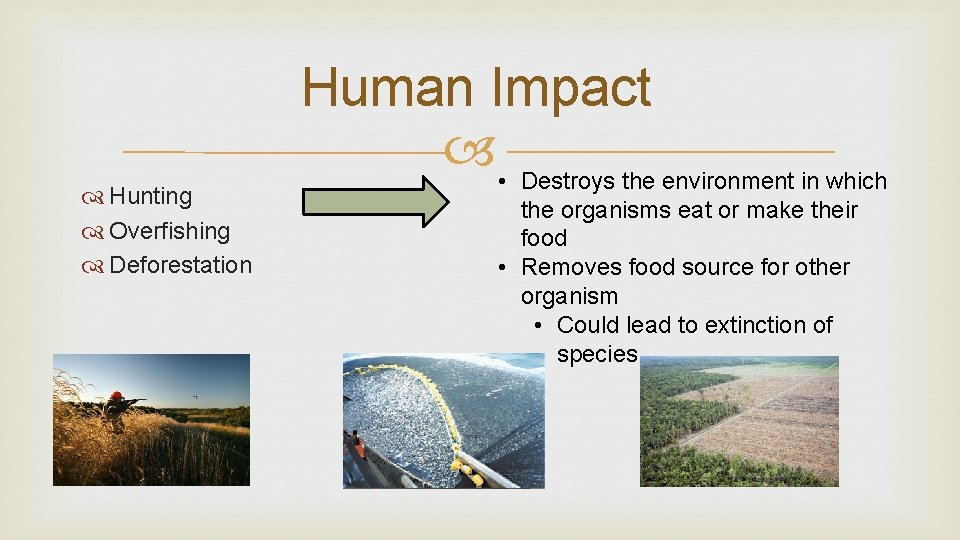 Hunting Overfishing Deforestation Human Impact • Destroys the environment in which the organisms