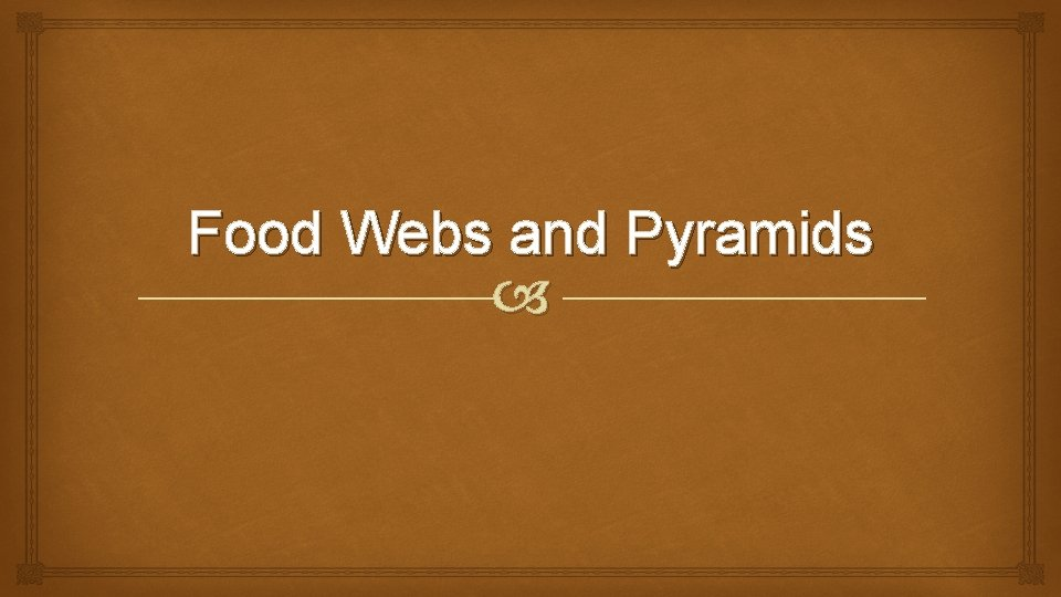Food Webs and Pyramids