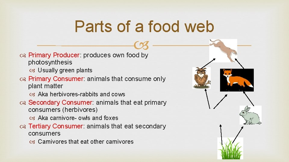 Parts of a food web Primary Producer: produces own food by photosynthesis Usually green