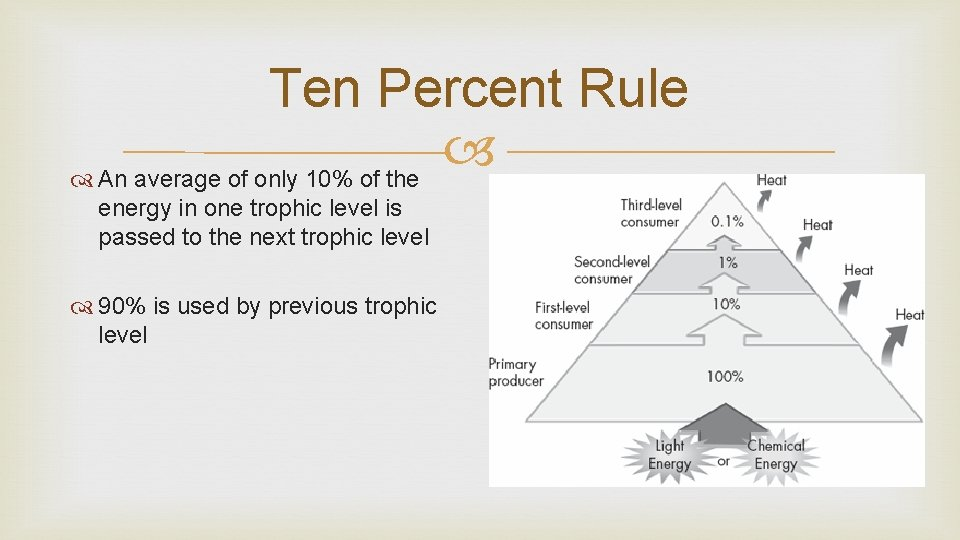 Ten Percent Rule An average of only 10% of the energy in one trophic