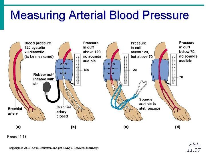 Measuring Arterial Blood Pressure Figure 11. 18 Copyright © 2003 Pearson Education, Inc. publishing
