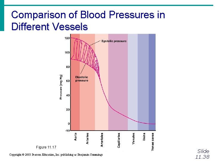 Comparison of Blood Pressures in Different Vessels Figure 11. 17 Copyright © 2003 Pearson