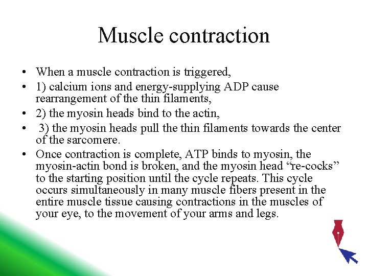 Muscle contraction • When a muscle contraction is triggered, • 1) calcium ions and