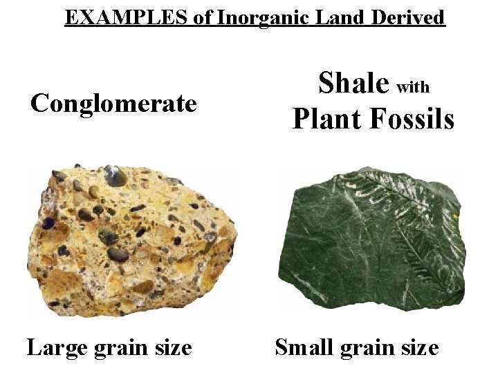 EXAMPLES of Inorganic Land Derived Conglomerate Large grain size Shale with Plant Fossils Small