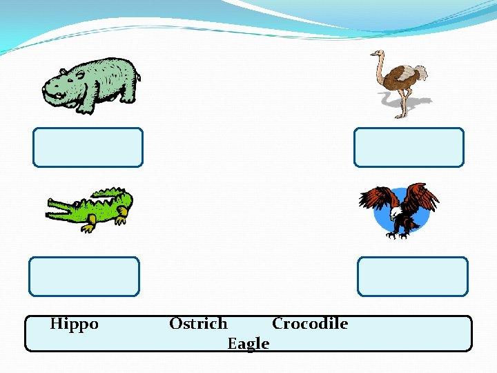 Hippo Ostrich Crocodile Eagle