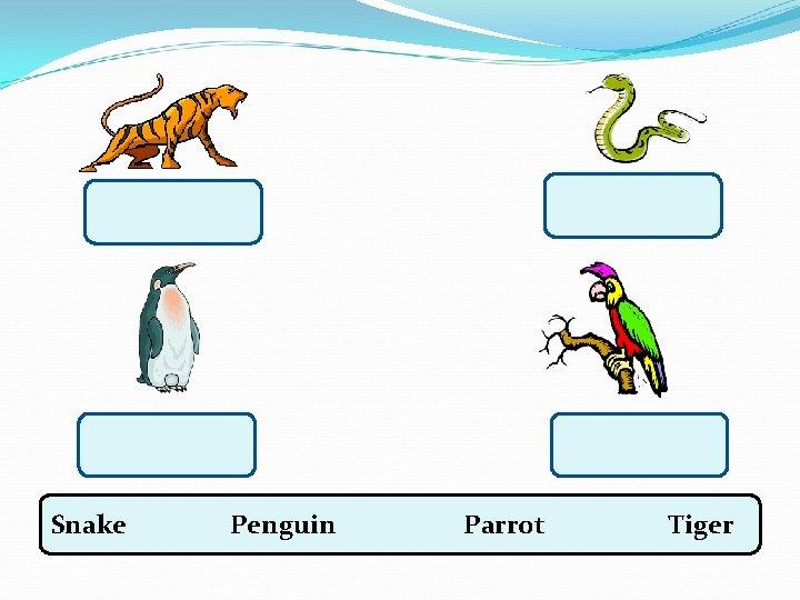 Snake Penguin Parrot Tiger