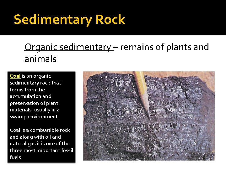 Sedimentary Rock Organic sedimentary – remains of plants and animals Coal is an organic