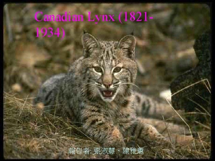 Canadian Lynx (18211934) 報告者: 張淑慧、陳雅蕙