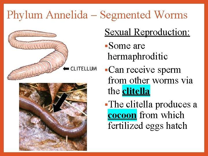 ascaris annelid a fehérség megöli a pinworm tojásokat