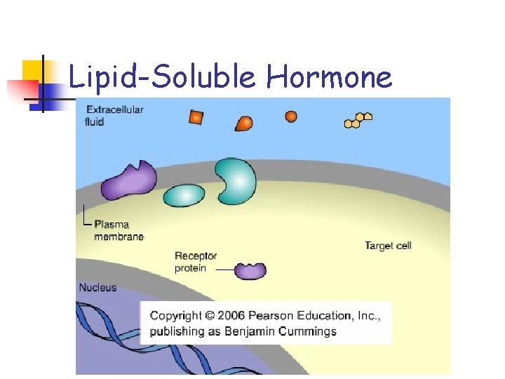 Lipid-Soluble Hormone