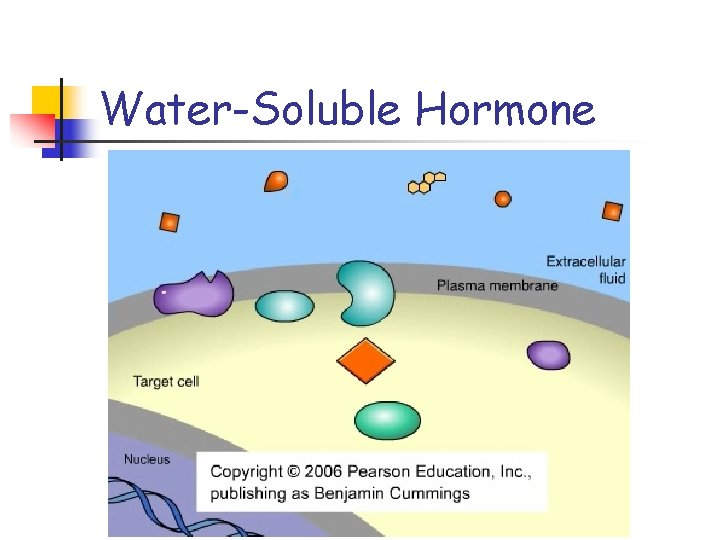 Water-Soluble Hormone