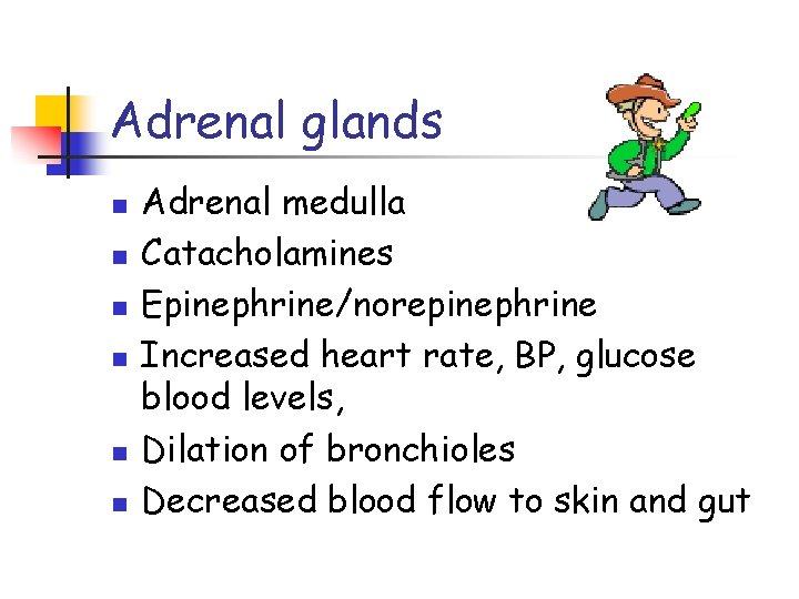 Adrenal glands n n n Adrenal medulla Catacholamines Epinephrine/norepinephrine Increased heart rate, BP, glucose