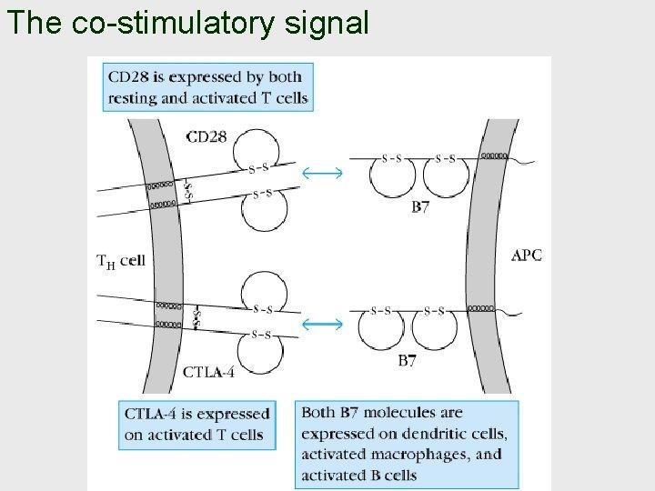 The co-stimulatory signal
