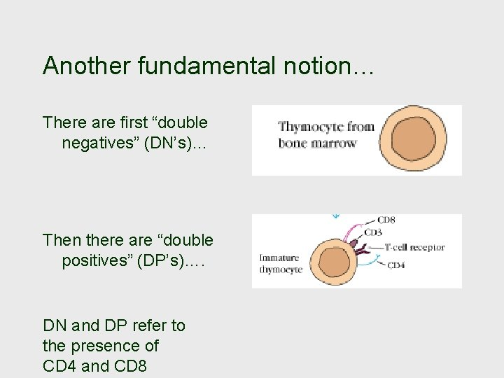 """Another fundamental notion… There are first """"double negatives"""" (DN's)… Then there are """"double positives"""""""