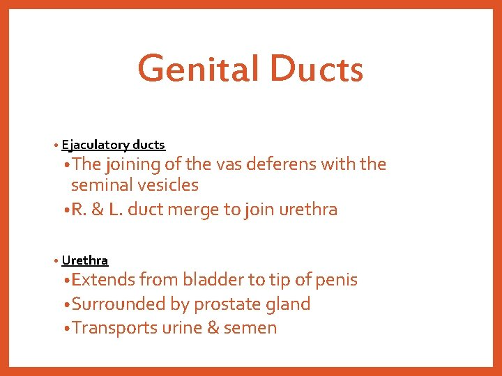 Genital Ducts • Ejaculatory ducts • The joining of the vas deferens with the