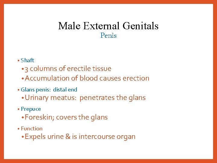 Male External Genitals Penis • Shaft • 3 columns of erectile tissue • Accumulation
