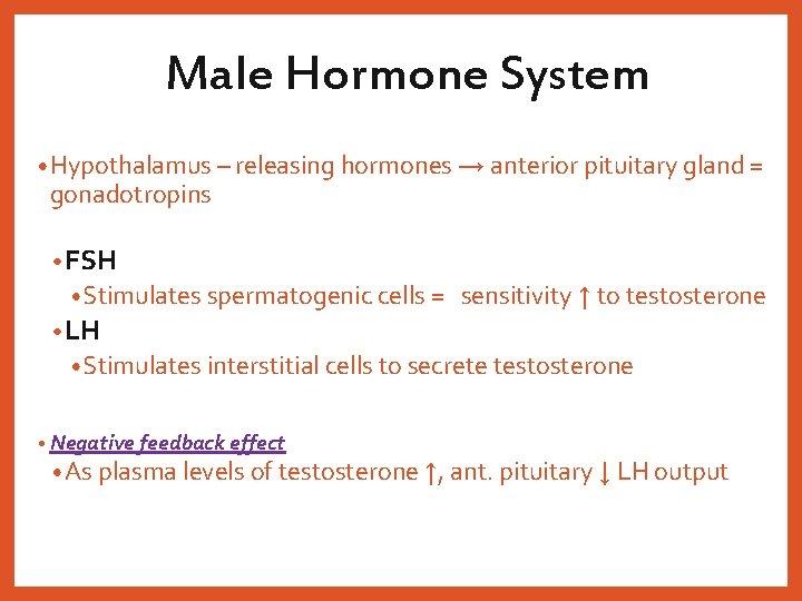 Male Hormone System • Hypothalamus – releasing hormones → anterior pituitary gland = gonadotropins