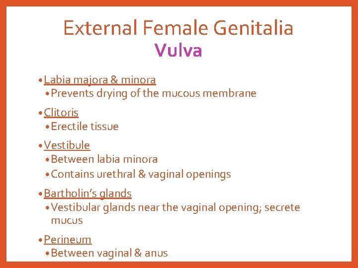 External Female Genitalia Vulva • Labia majora & minora • Prevents drying of the