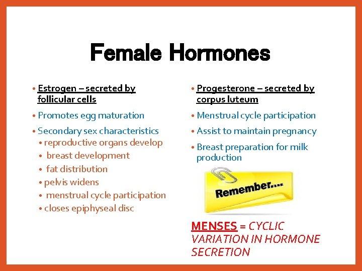 Female Hormones • Estrogen – secreted by • Progesterone – secreted by • Promotes