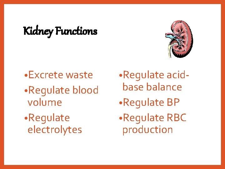 Kidney Functions • Excrete waste • Regulate blood volume • Regulate electrolytes • Regulate